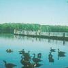 Burke Lake