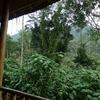 Bwindi Forest View From Banda UG