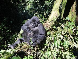 3 Day Uganda Gorillas Safari Photos