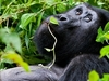 @ Bwindi Impenetrable National Park UG