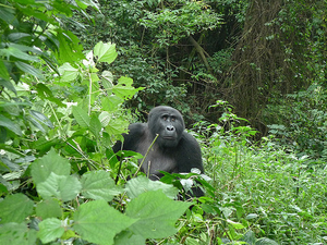 Friends Nature Safaris 5 Days And 4 Nights Gorilla Tracking Photos