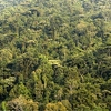 Bwindi Tropical Forest Overview UG