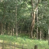 Baneshwar Jungle