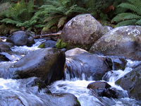 Barrington Tops National Park