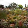 Botanic Garden Walk