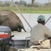 Boat Safaris