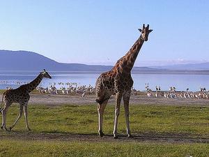 10 Days Best of Kenya Safari Fotos