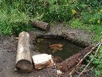 Cabin Springs