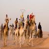 Camel Race - Algeria