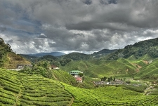 Cameron Highlands Landscape