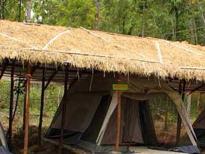 Deep Jungle Home