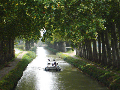 Plane Trees Around Canal Du Midi