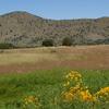 Canelo Hills At Bullfrog Pond