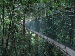 Kinabalu Park Canopy Walkway and Poring Hot Springs Full-Day Tour from Kota Kinabalu Photos