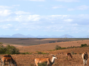 Cape Town Safari Package Photos