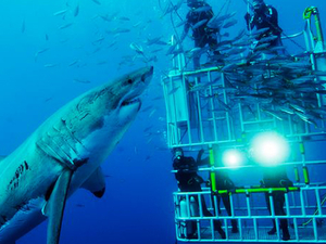 Shark Cage Dive | Cape Town