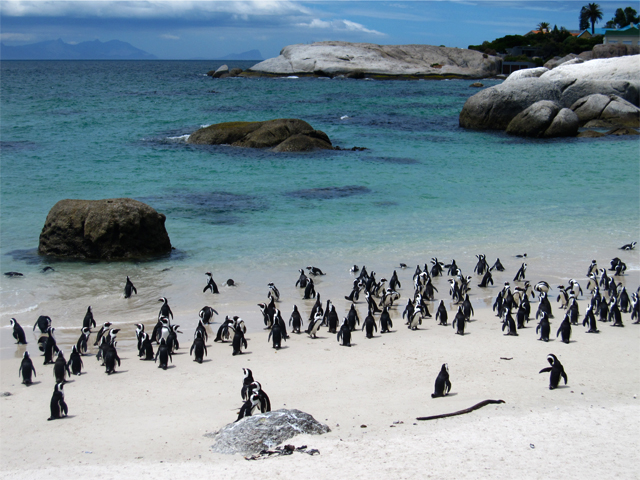 South African Escape Photos