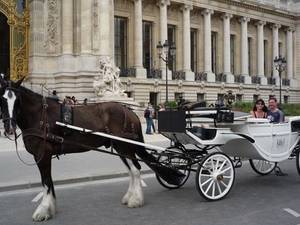 Romantic Horse and Carriage Ride through Paris Photos