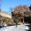 Castello Del Valentino Tree Side