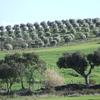 Castro Verde Country Side