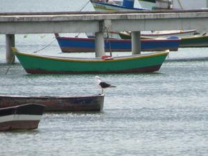 Catamaran Buzios. Photos
