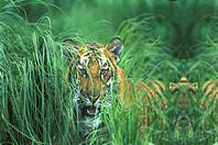 Chail Wildlife Sanctuary