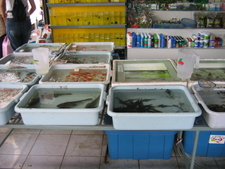 Fish For Sale At The Animal Section