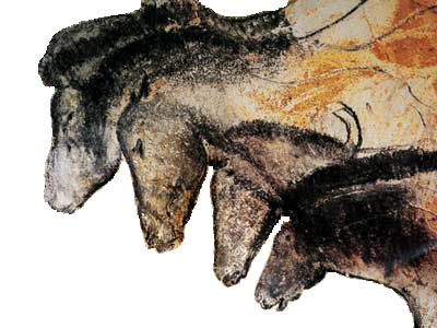 Drawings Of Horses From Chauvet Cave