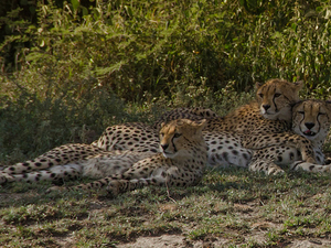 Tanzania Safari Tour Deals Photos
