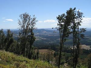 Chehalem Mountains