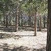 Chilao Picnic Site