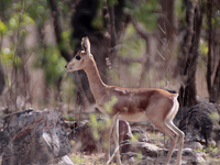 Mayureshwar Wildlife Sanctuary