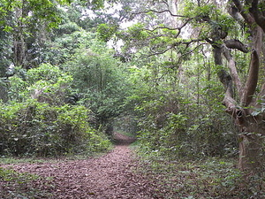 Chintamani Kar Bird Sanctuary