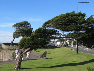 Clevedon Tree