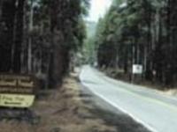 Coconino Pine Flat West