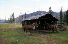 Cold Creek Patrol Cabin - Yellowstone - USA