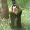 Cordoba Zoo