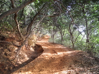 Coronation Point Trail - Matheran - Maharashtra - India