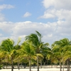 Crandon Park Modified