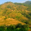 Crops And Houses On The Hills Of Nagarkot