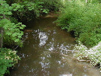 Cross Brook