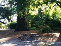 Cook Park