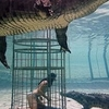 Woman Crocodile Cage Diving At Cango Wildlife Ranch