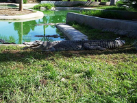 Davao Crocodile Park