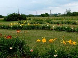 Daylily Garden