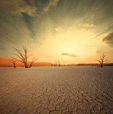Deadvlei - Namib Desert