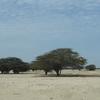 Desierto De Sechura 02