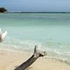 Desroches Beach Pietervisser