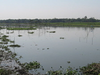 Deepor Beel Bird Sanctuary
