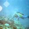 Diver Exploring R M S Rhone